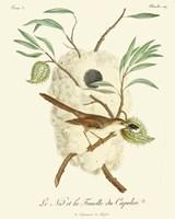 Vintage French Birds VII Fine Art Print