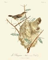 Vintage French Birds VIII Fine Art Print