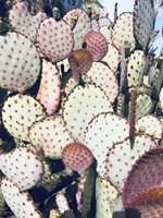 Pink Yellow Cactus IV Fine Art Print