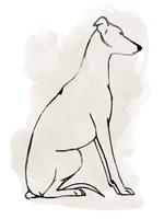 Greyhound Sketch I Fine Art Print