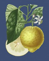 French Lemon on Navy I Fine Art Print