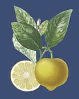 French Lemon on Navy II Fine Art Print