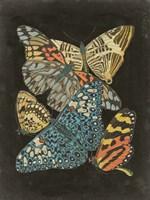 Winged Patterns II Fine Art Print