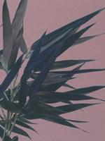 Bamboo Pink I Fine Art Print