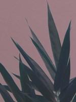 Bamboo Pink II Fine Art Print