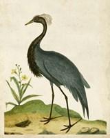 Heron Portrait II Fine Art Print