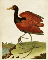Heron Portrait IV Fine Art Print