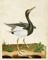 Heron Portrait V Fine Art Print