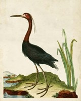Heron Portrait VI Fine Art Print