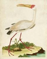 Heron Portrait VII Fine Art Print