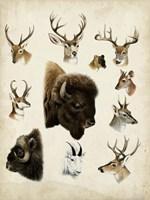 Western Animal Species I Fine Art Print
