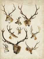 Western Animal Species II Fine Art Print