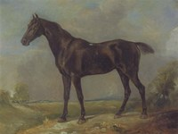Golding Constable's Black Riding-Horse Fine Art Print