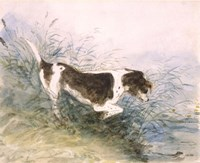 Dog Watching a Rat in the Water Fine Art Print