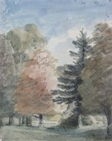 Study of Trees in a Park Fine Art Print