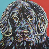 Canine Buddy I Fine Art Print
