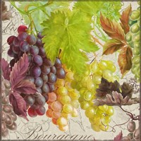 Vintage Fruits II Grapes Fine Art Print