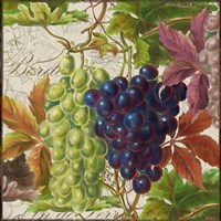 Vintage Fruits III Grapes Fine Art Print