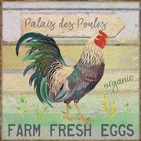 Egg Farm Rooster Fine Art Print