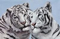 Loving White Tigers Framed Print