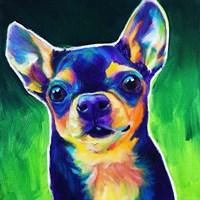Chihuahua - Jack Fine Art Print