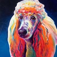 Poodle - Hans Fine Art Print