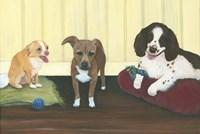 Three Pups Fine Art Print