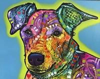 Shamus Fine Art Print