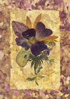 Dried Flowers 34 Fine Art Print
