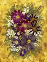 Dried Flowers 36 Fine Art Print