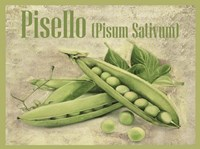 Pisello Pisum Sativum Fine Art Print