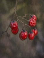 Berries 2 Fine Art Print