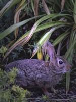 Bunny Fine Art Print