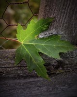 Leaf Fine Art Print