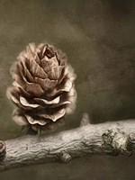 Pinecone Fine Art Print