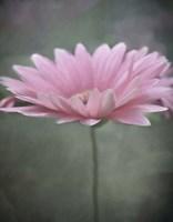 Pink Bloom 1 Fine Art Print