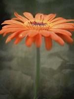 Tangerine Fine Art Print