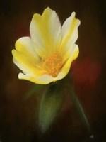 Yellow Bloom Fine Art Print