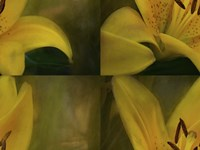 Lily Abstract Fine Art Print