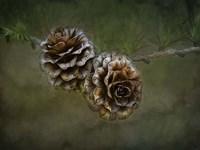 2 Pinecones Fine Art Print