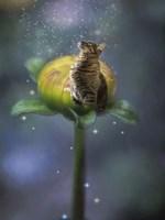 Fantasy Cat Fine Art Print
