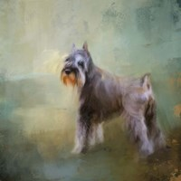 Schnauzer On Patrol Fine Art Print