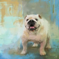 White English Bulldog Fine Art Print