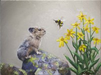 A Pika and a Bumblebee Fine Art Print