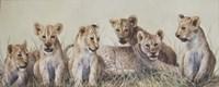 Cubs Fine Art Print