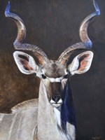 Greater Kudu Fine Art Print
