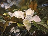 Magnolia Bloom 3 Fine Art Print