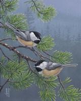 Pine Tree Chatter Fine Art Print