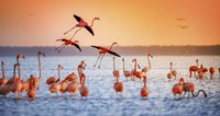 Flamingo Flight Fine Art Print
