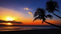 Palm Trees Sunset Fine Art Print